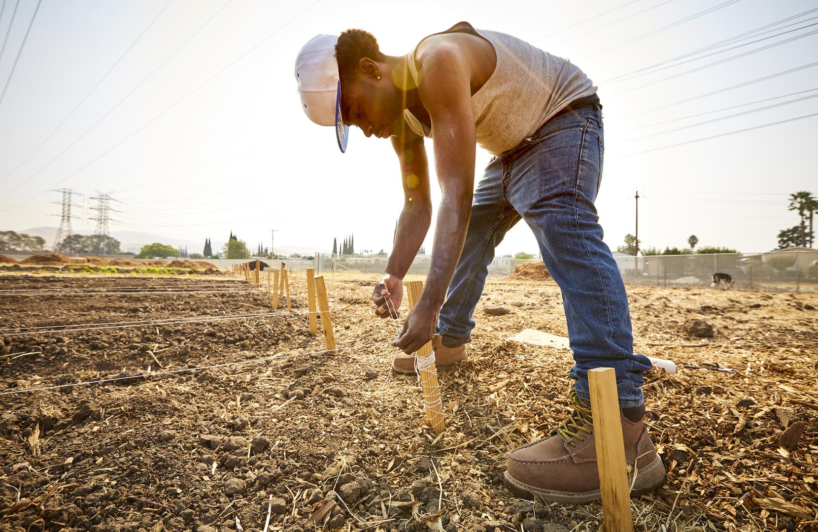 Young man preparing field rows for planting